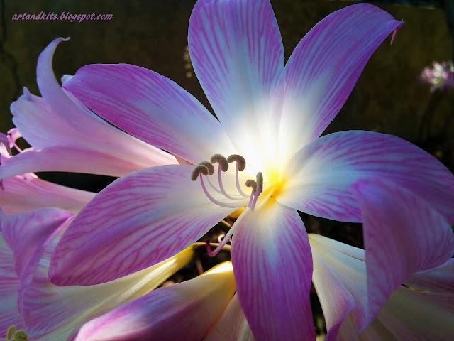 Mas uma visão... pode fazer o mundo brilhar... / A look... can blur the vision... But a vision... can make the world shine...