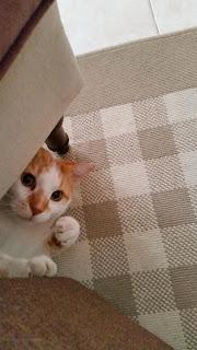 Kissa ja vuokrahuoneisto