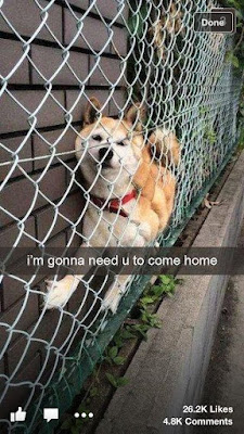 Funny Dog Humor : Come and get me please