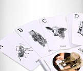 Octagon Animal 4D Flashcards