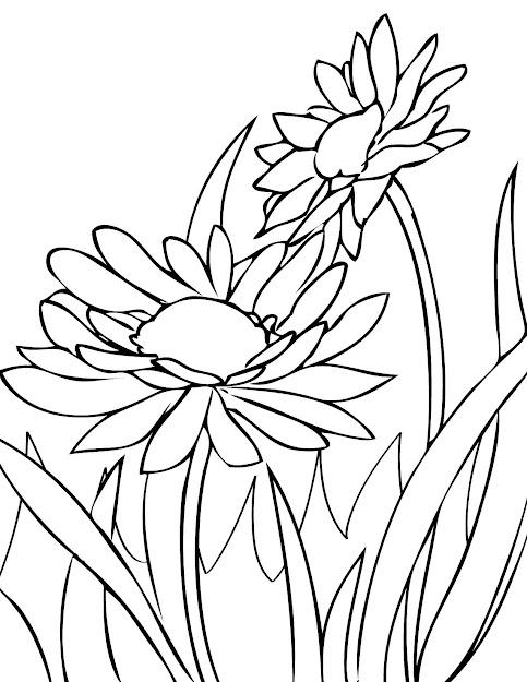 Daisy Coloring Pages With Daisy Coloring Pages