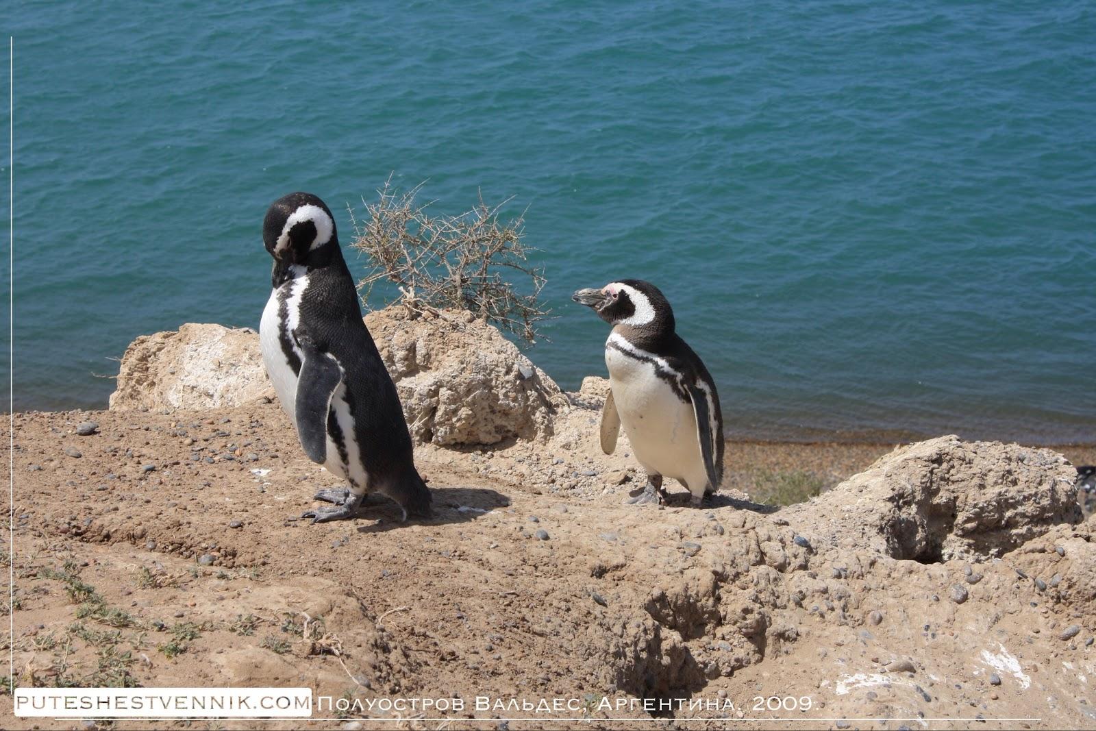 Пингвины на берегу