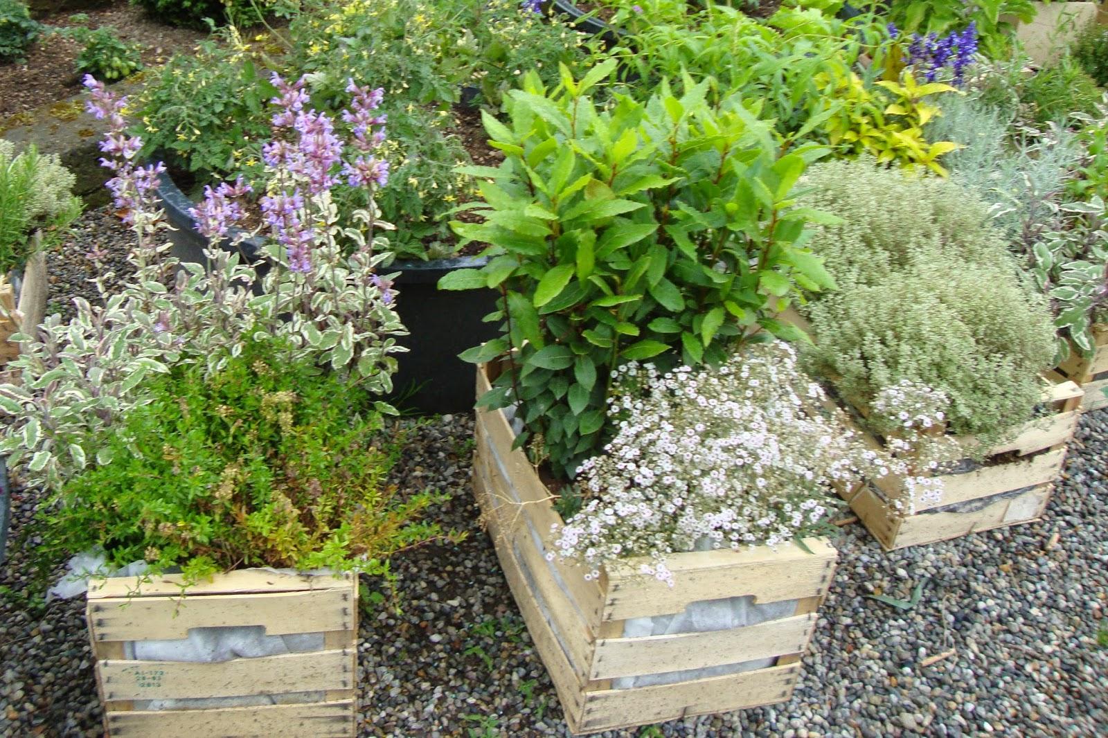 Un piccolo giardino in citt per la festa dei nonni for Aiuole profumate