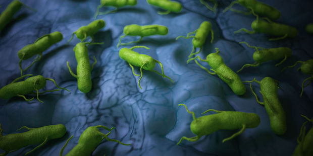 How the bacteria Salmonella could be used to fight tumour cells