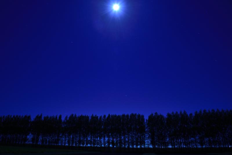 河北潟干拓地にあるメタセコイア並木の月光写真