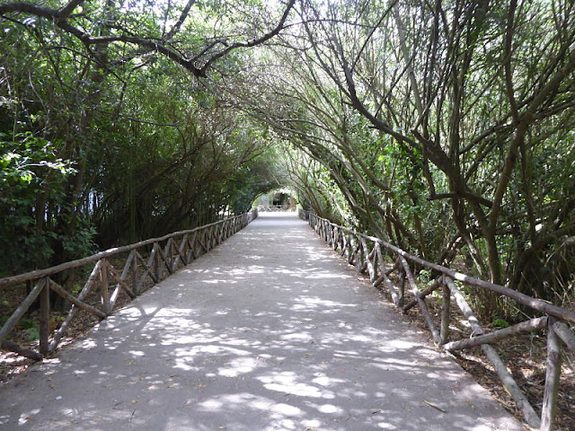 viale alberato che conduce alle latomie nella neapolis