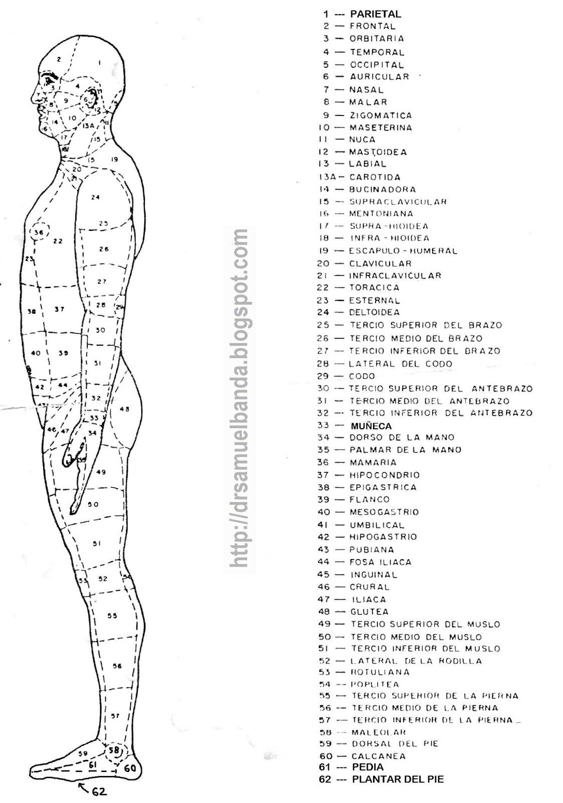 Dr Samuel Banda: Anatomía del cuerpo humano por regiones