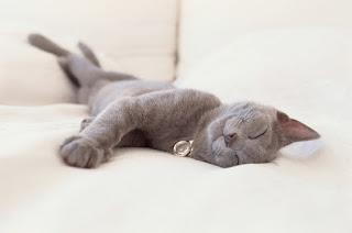 Perilaku Kucing yang Menertawakan
