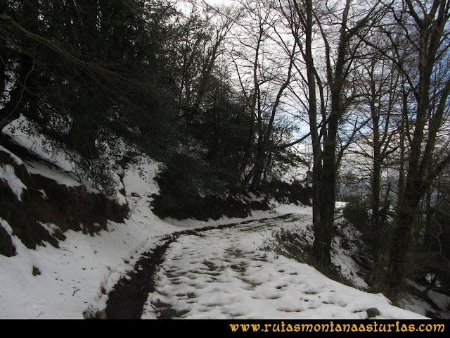 Pico Ranero: Bajando por la pista entre árboles