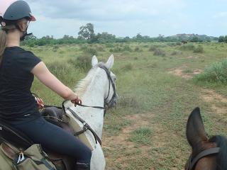 norsu, mashatu, botswana, ratsastussafari, hevonen, riitta reissaa