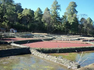 TARIN FISH FARM, Arunanchal Pradesh