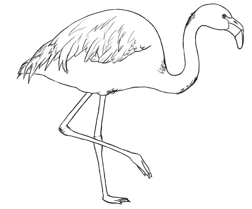 Line Art Emui : How to draw a flamingo central