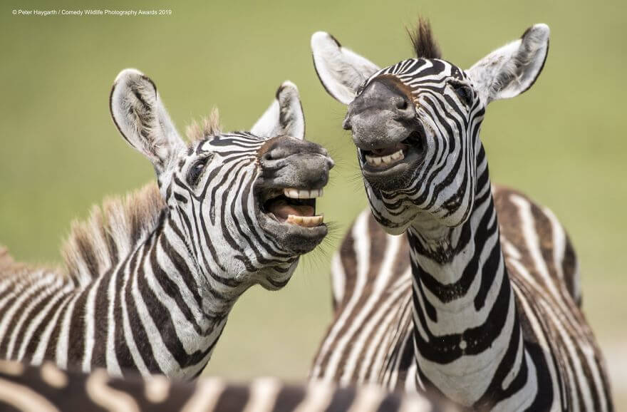 Hilariously Adorable Entries From The 2019 Comedy Wildlife Photography Awards
