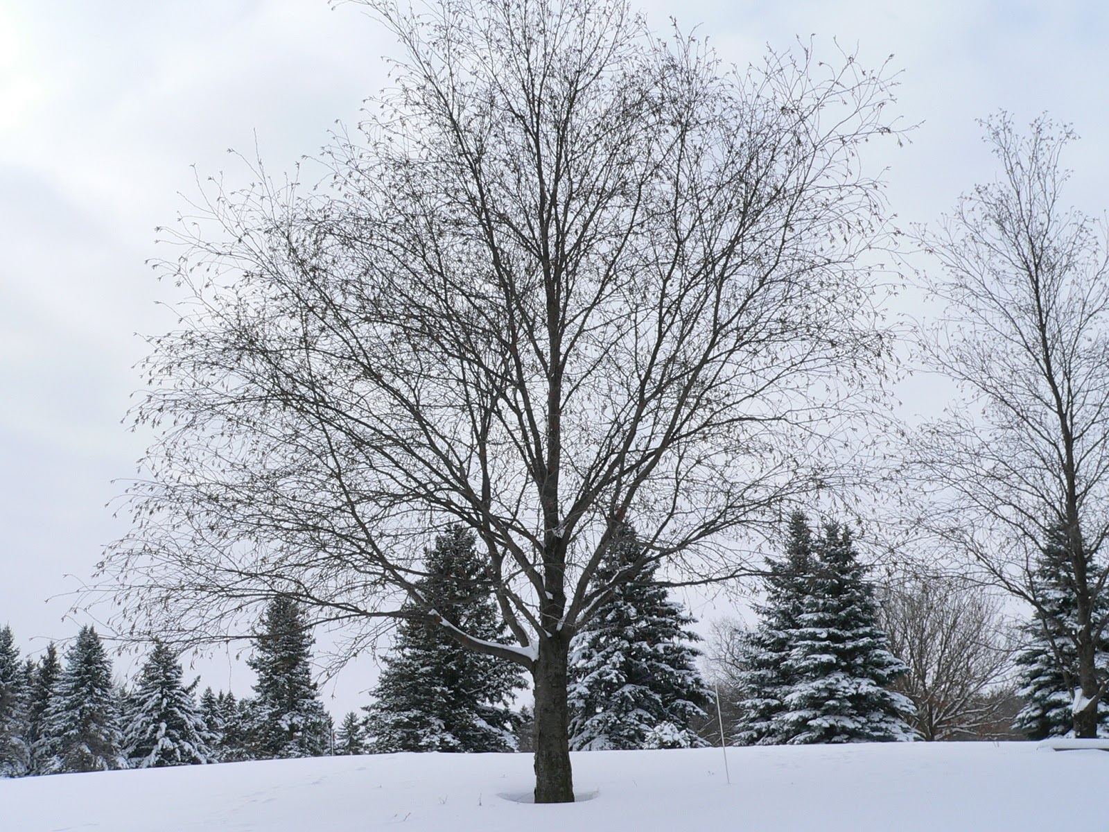 preparing your trees for winter yard and garden news