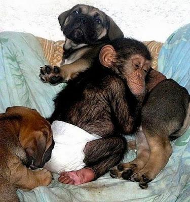 Fotografia de monito acurrucado sobre un perro