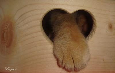 cd6af4e38 a to moja łapa:) Moja Duża postanowiła zapisać się na wyzwanie u Hanulka na  temat kotów:)No i wyobraźcie sobie,że ja:) ja:)kot Franek zaistniałem w tym  ...
