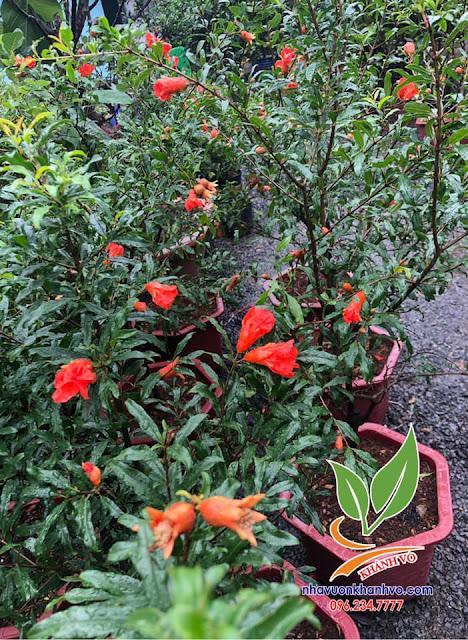 rao vặt nhanh nhất - rao vặt miễn phí