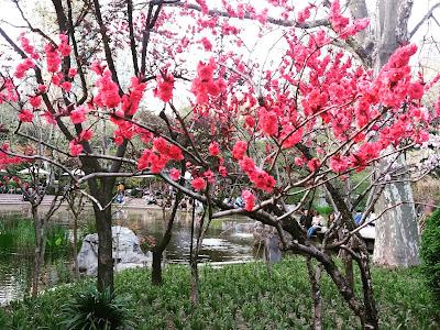garden shanghai