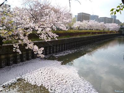 花弁の絨毯