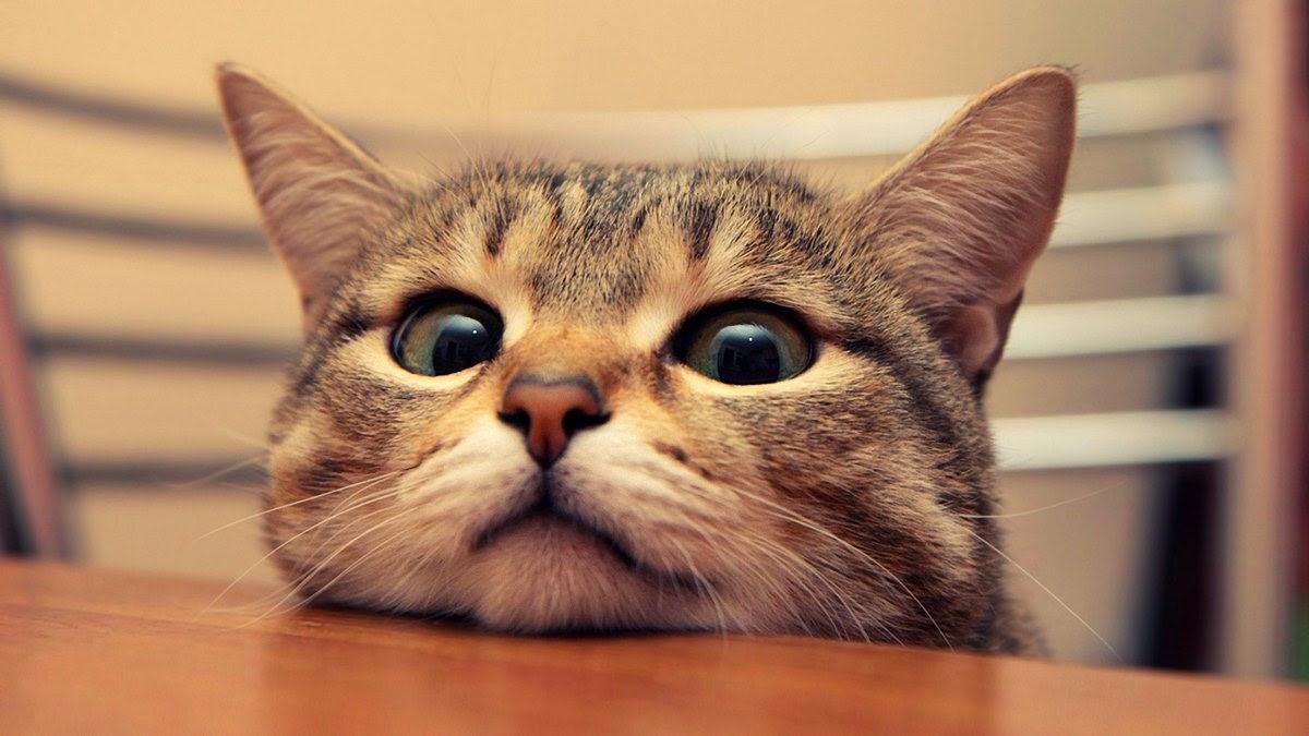 13 Aksi Lucu Kucing Terjatuh Yang Akan Membuatmu Terhibur