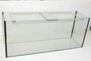 Cara Praktis Membersihkan Kaca Aquarium
