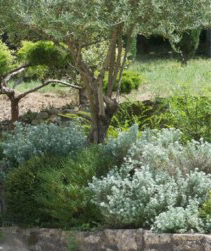 Olive tree via Jardins-Maisons, edited by lb for (l&l)
