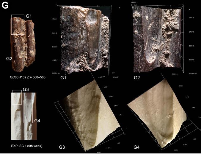 Huellas de corte identificadas en huesos de animales en Cueva Quesem y su comparación con huellas experimentales. Foto: Ruth Blasco.