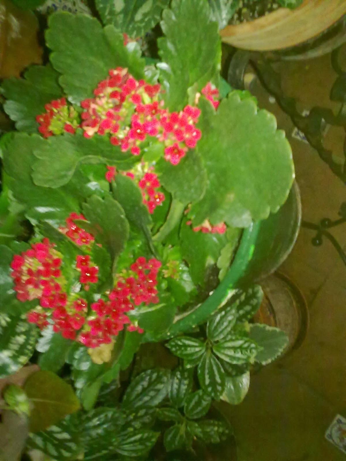 Que plantas poner en el interior de mi casa