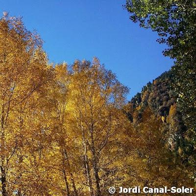 Árboles dorados