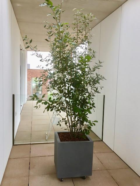 Planten op terras of balkon voor buiten in de volle zon die winterhard of wintervast zijn in Antwerpen Brussel Leuven Mechelen Hasselt Genk