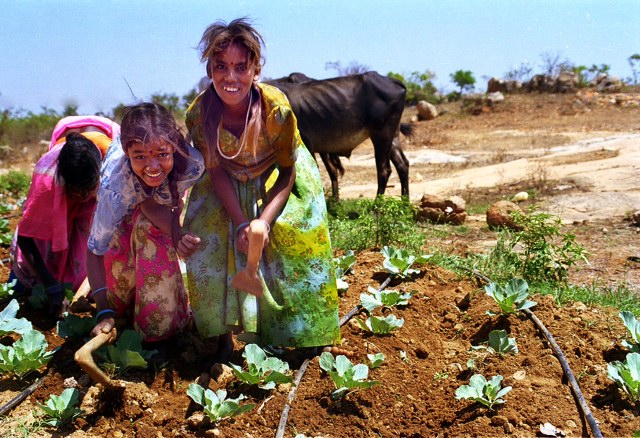 family farming in India