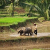 Beberapa Istilah Yang Berkaitan Dengan Kegiatan Pertanian Sunda