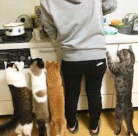 Muezza Kucing Nabi Muhammad Ras Kucing Anggora