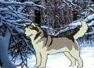 Juegos de Escape - Save the Sled Dog