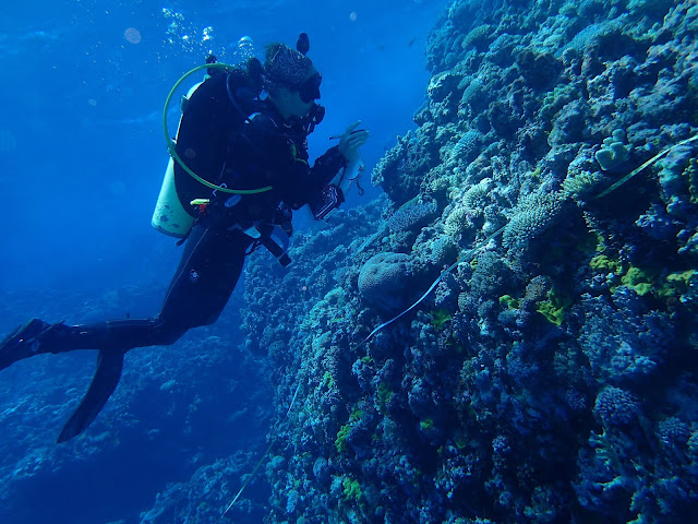 New study predicts worldwide change in shallow reef ecosystems as waters warm
