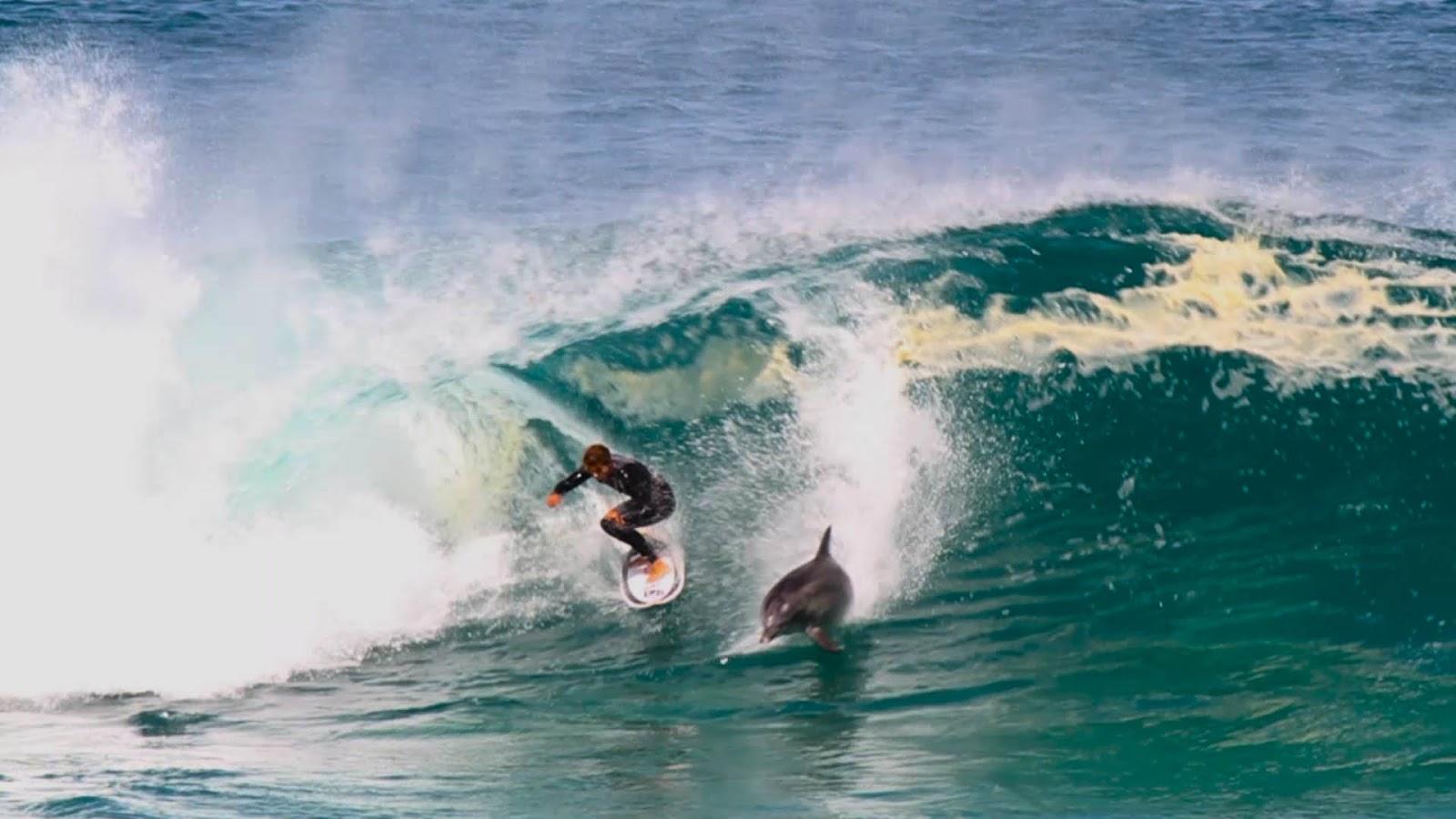 delfin saltando una ola surfer