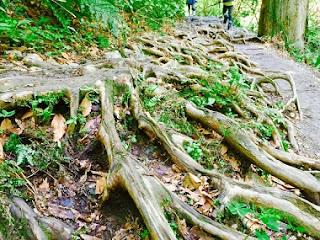 木の根っこの写真