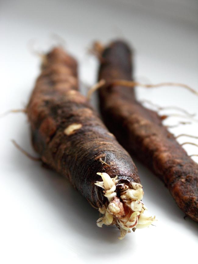 skorzonera zwana zimowym szparagiem
