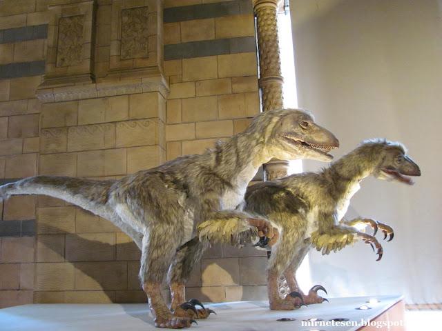 Музей естественной истории - динозавры