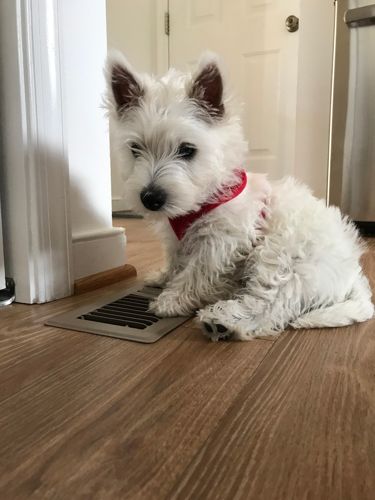 Dog Barks When Learning New Things