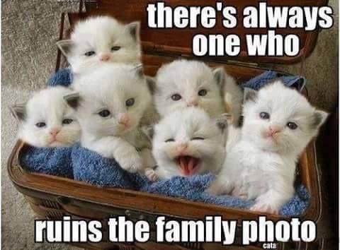 Cute Cat Memes 6
