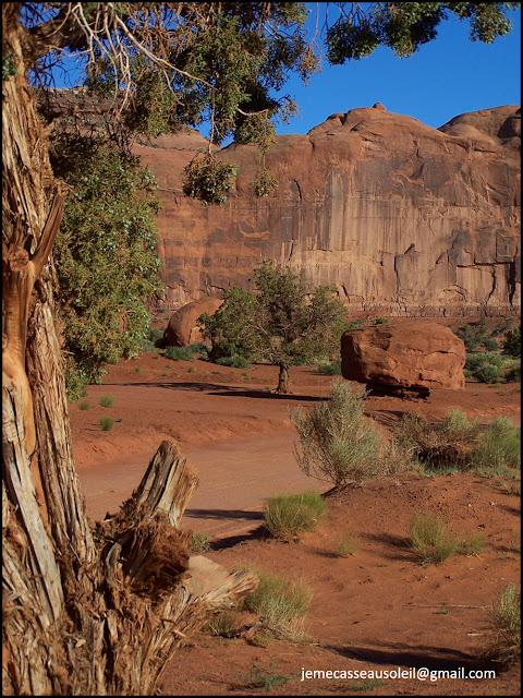 Un air de Bush Australien à Monument Valley