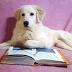 Ο ΟΔΥΣΣΕΑΣ ΨΑΧΝΕΙ ΤΗΝ ΙΘΑΚΗ ΤΟΥ! Ένας γλυκός σκυλάκος για υιοθεσία...