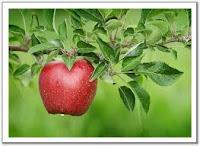 التفاح مصدر نباتي