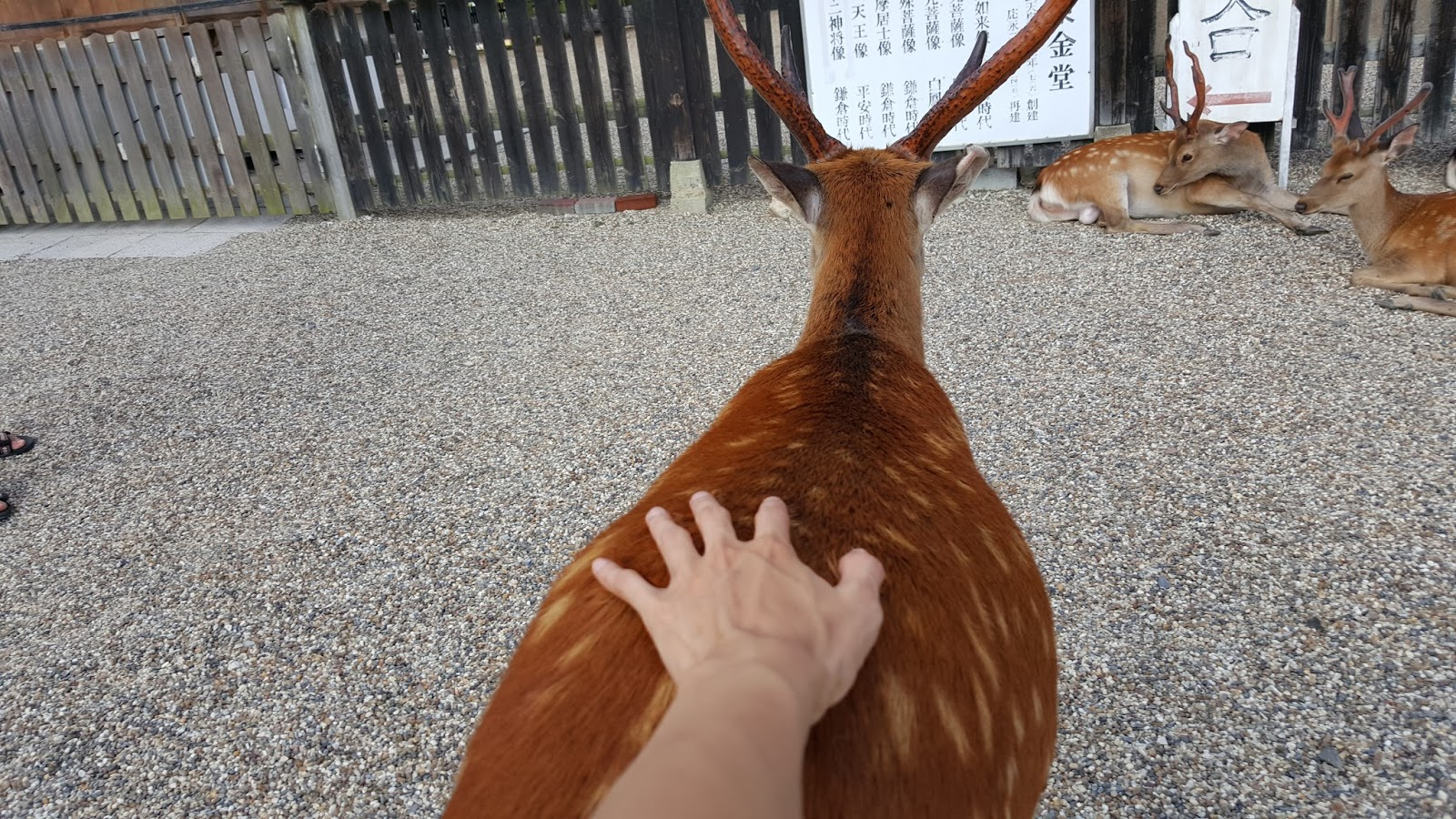 HANGING OUT WITH MY DEER FRIENDS @ NARA PARK (A PHOTO DIARY)