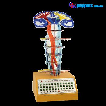 harga alat peraga elektrik konduksi pusat saraf