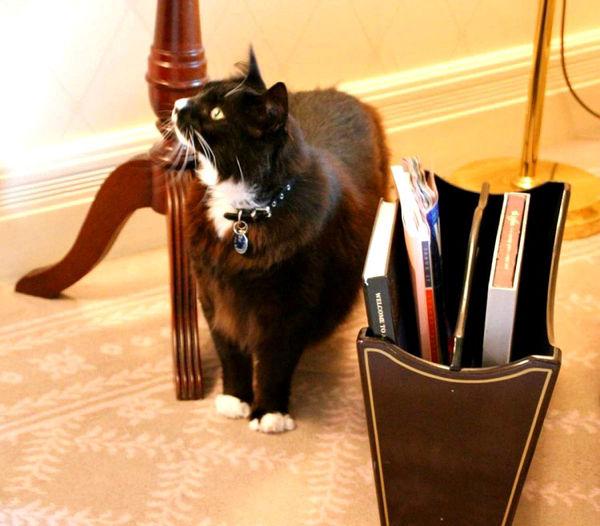 sydney langham cats
