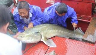 Nelayan Ini Terkejut Tangkap Ikan Misterius