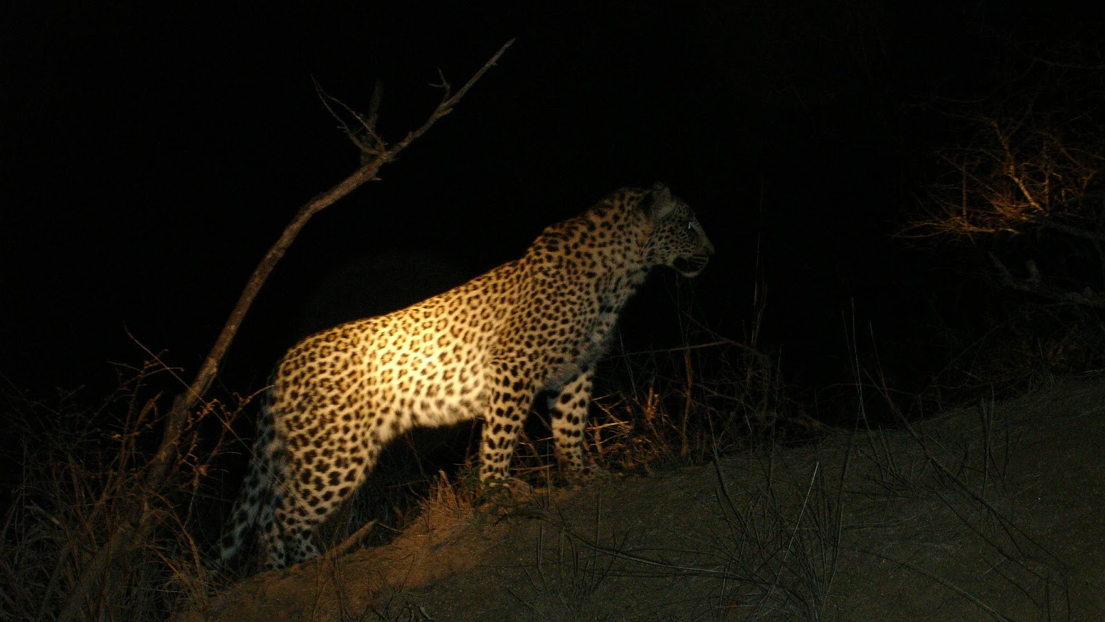 reserve naturelle Madikwe