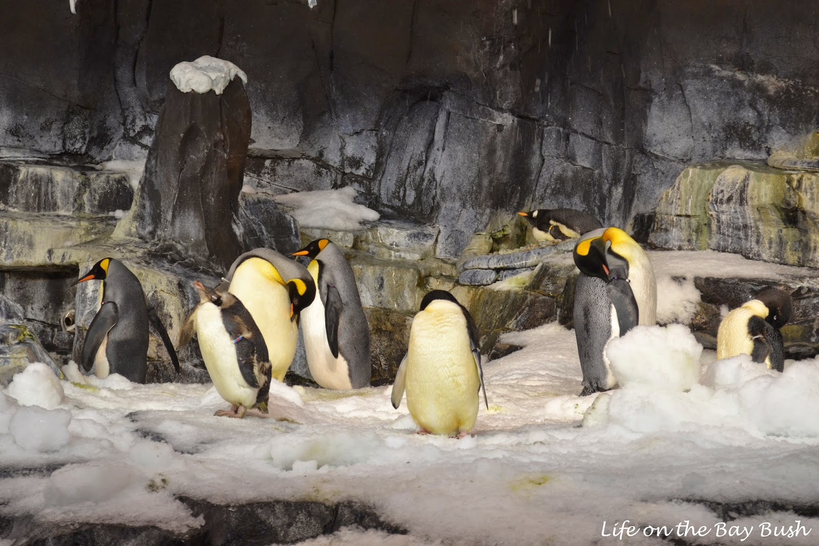 Cute Penguins at SeaWorld Orlando